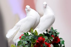 jeden z symboli ślubu - dwa gołębie